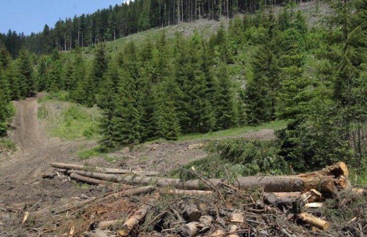 Незаконно вырубленный лес из Украины идет на мебель IKEA