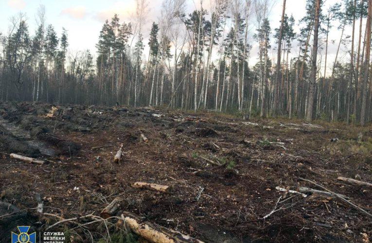 СБУ виявила масштабну вирубку лісів на заході та півночі України