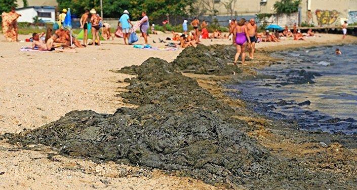 Море Одессы стало «зеленым» из-за цветущих водорослей
