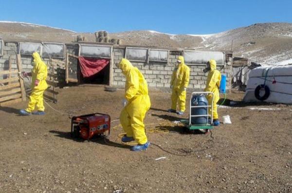 Спалах «бубонної чуми» в Китаї: ВООЗ не бачить високих ризиків