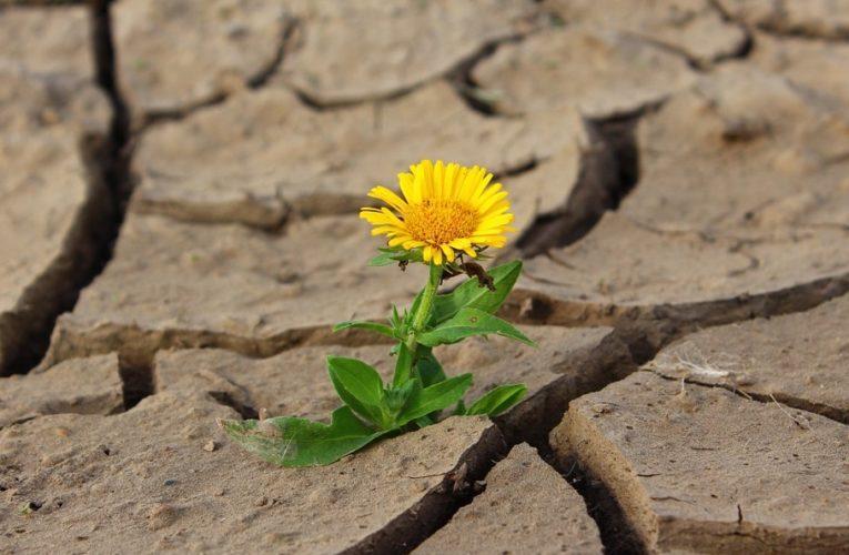 Засуха в Крыму «превзошла все ожидания»