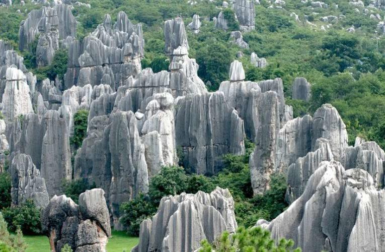 Ученые из США объяснили механизм формирования «каменного» леса