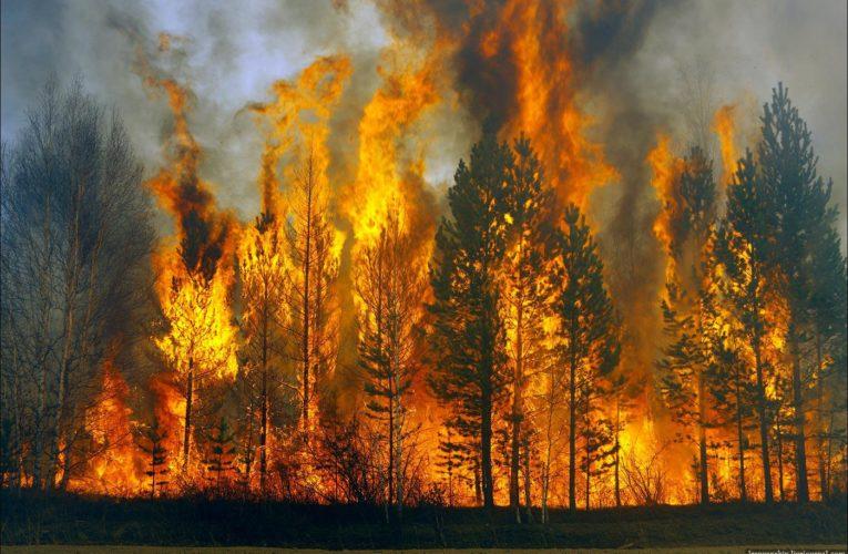 ДСНС попереджає про надзвичайний рівень пожежної небезпеки в більшості областей України