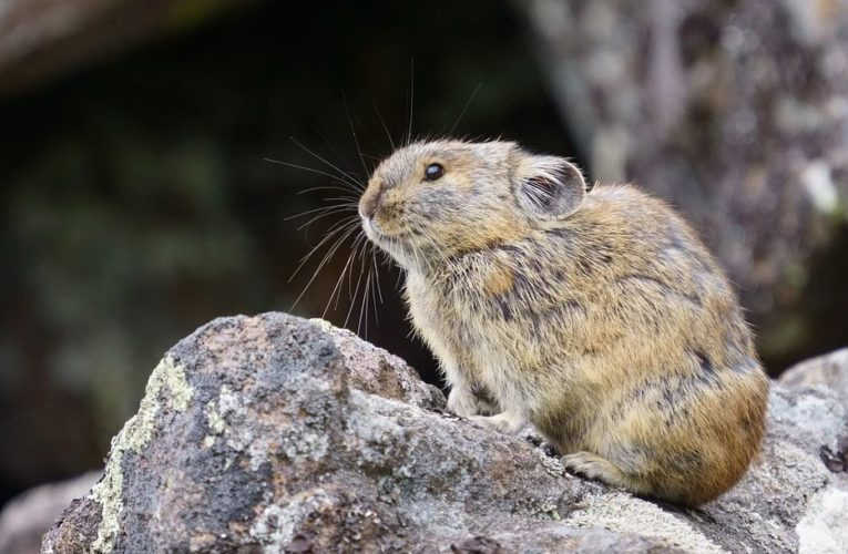 Ученые нашли останки неизвестных науке зайцеобразных