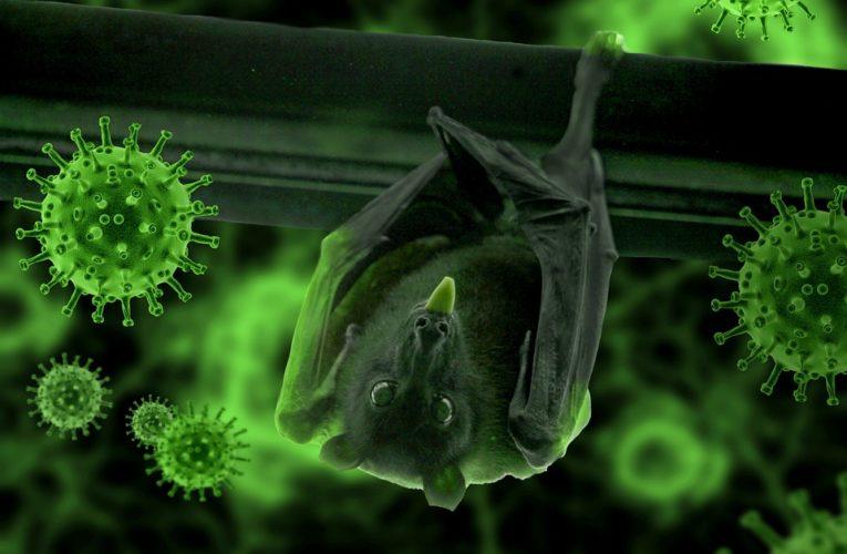 Ученые назвали животных, которые могут спровоцировать следующую эпидемию коронавируса