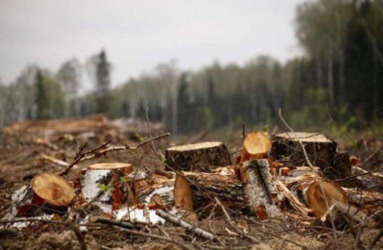 На Киевщине вырубили лес на десятки миллионов гривен