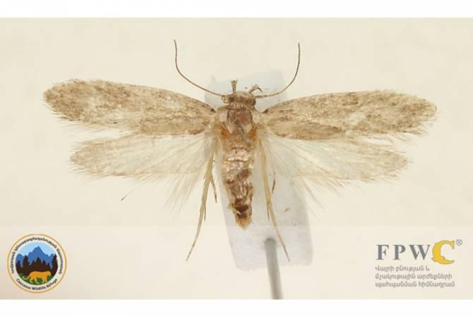 Ученые обнаружили новый вид насекомых