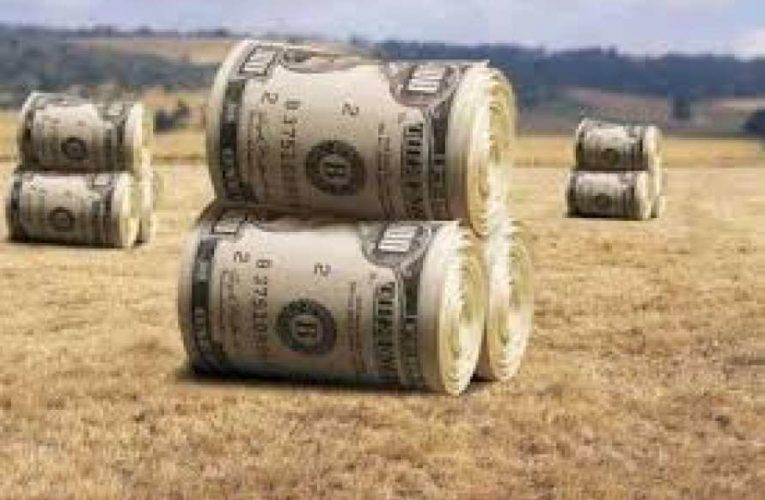 В правительстве рассказали, сколько будет стоить земля, после введения рынка в Украине