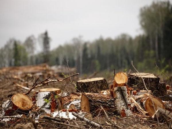 Полиция Киевщины задержала грузовик с незаконно вырубленным лесом