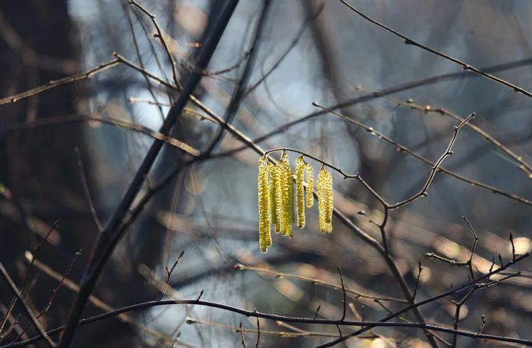Синоптики дали прогноз на февраль