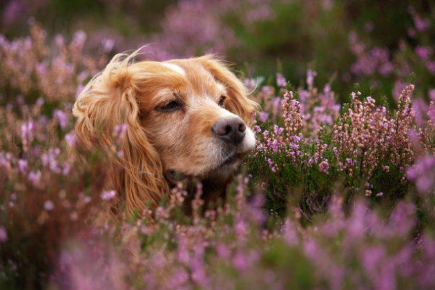 В Великобритании породистые щенки из-за пандемии подорожали до 150 тысяч гривен