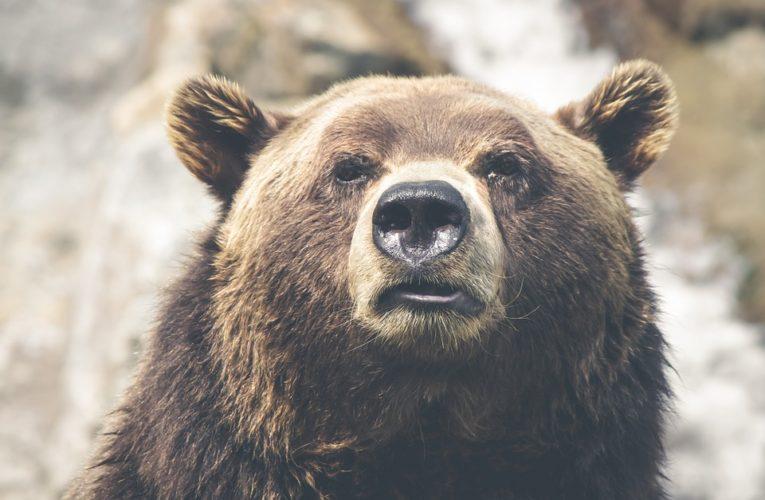 Жительницу Аляски во время похода в туалет укусил медведь