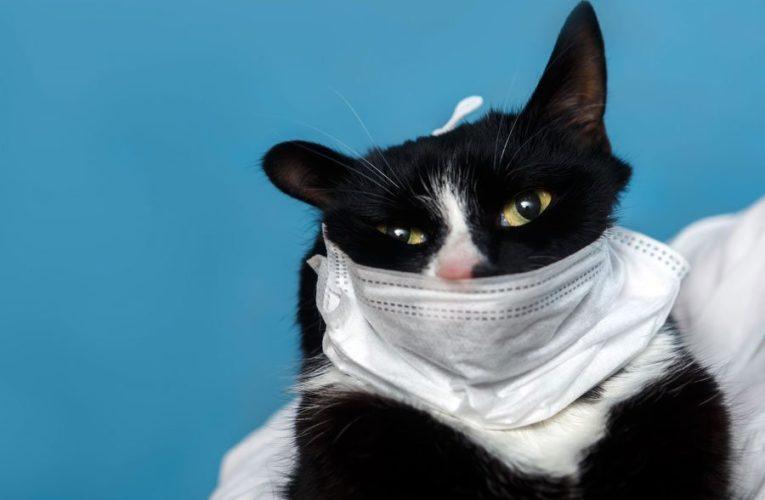 Ученые оценили вероятность заражения COVID-19 от кошек