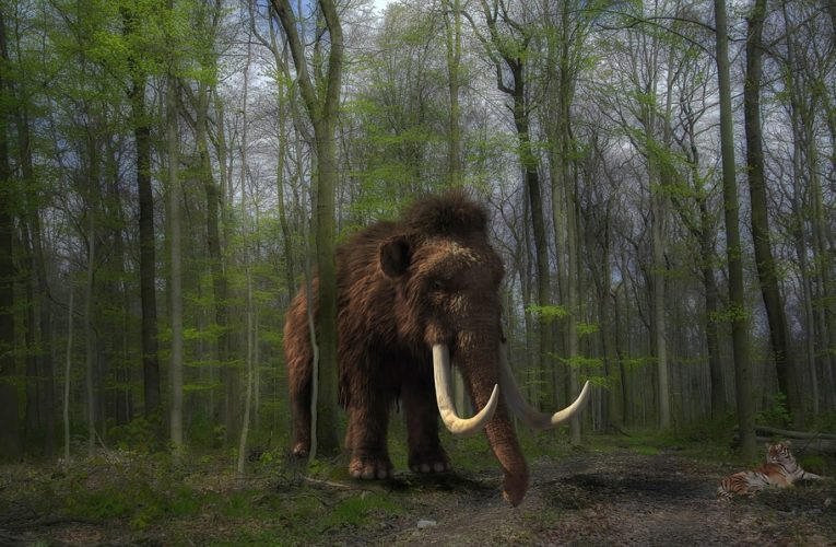 Ученые извлекли ДНК из зубов мамонтов возрастом 1,2 млн лет
