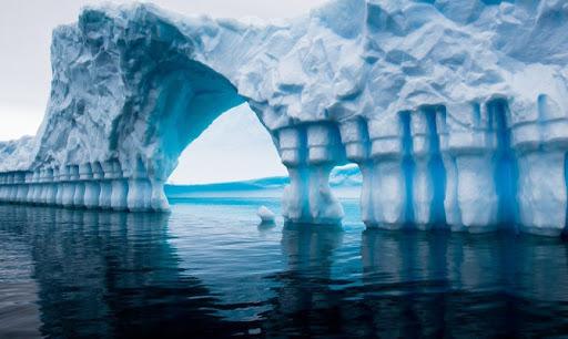 Ученые обнаружили неизвестных животных под шельфовым ледником Антарктиды