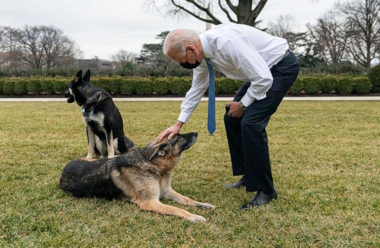 Собак Байдена выгнали из Белого дома