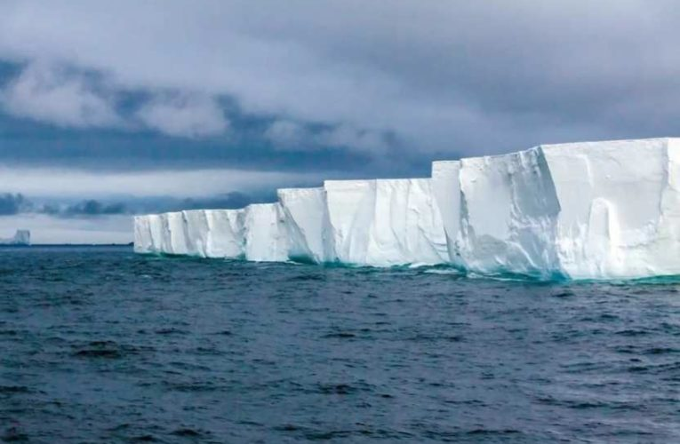 В Антарктиде подо льдом обнаружены больше 30 неизвестных науке животных