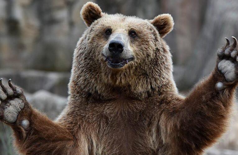 Медведь залез к американцу в джакузи (Видео)