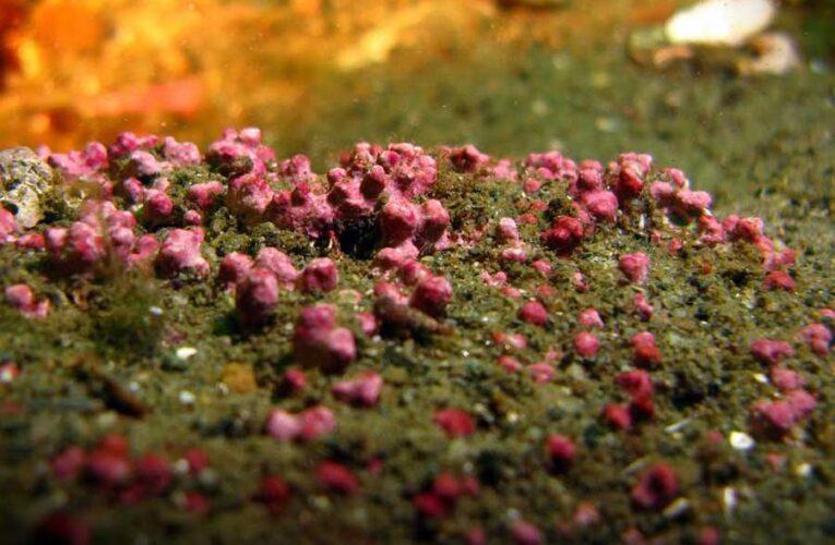 Ученые обнаружили генетически уникальное поселение водорослей