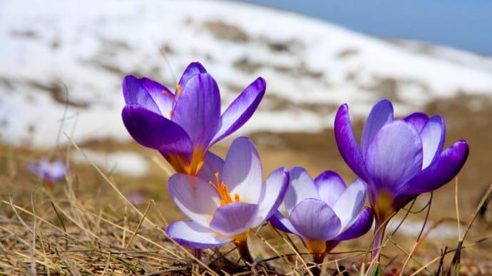 Синоптики рассказали, какой будет погода в первые дни весны