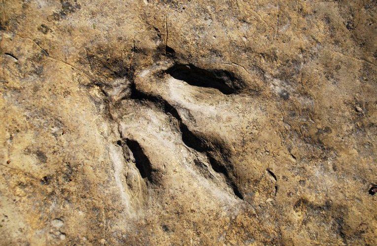 В Китае обнаружено множество ископаемых следов динозавров