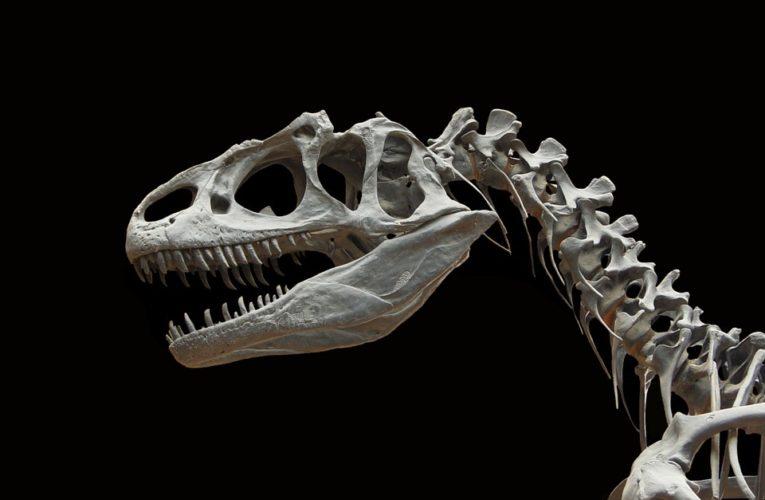 Археологи обнаружили окаменелые останки динозавра, сидящего на кладке яиц
