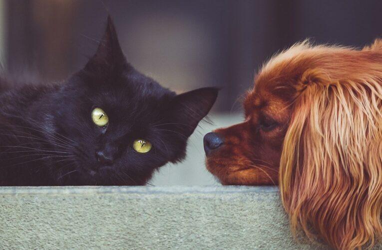 Вакцину от коронавируса для кошек и собак представят в конце апреля