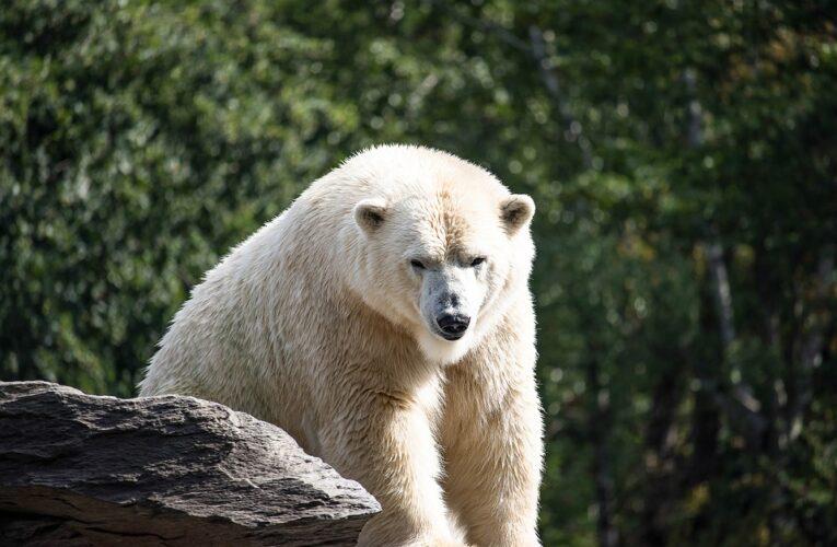 В Китае открыли отель с белыми медведями