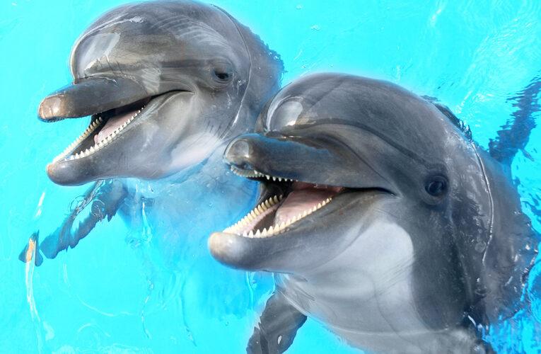 Дельфины вернулись в венецианские каналы