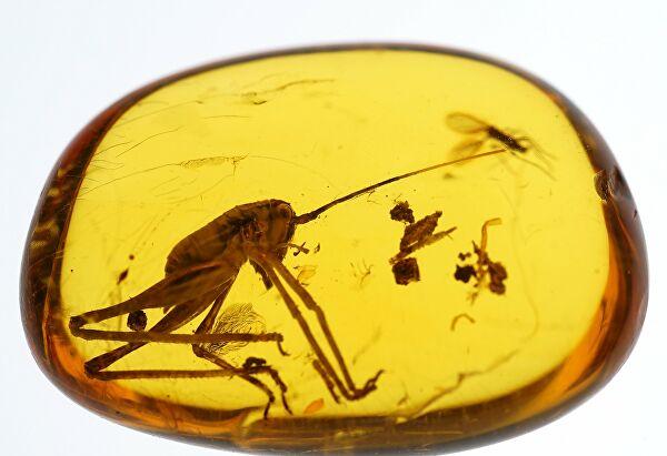 Ученые нашли в янтаре насекомое с пыльцой цветов времен динозавров (Фото)