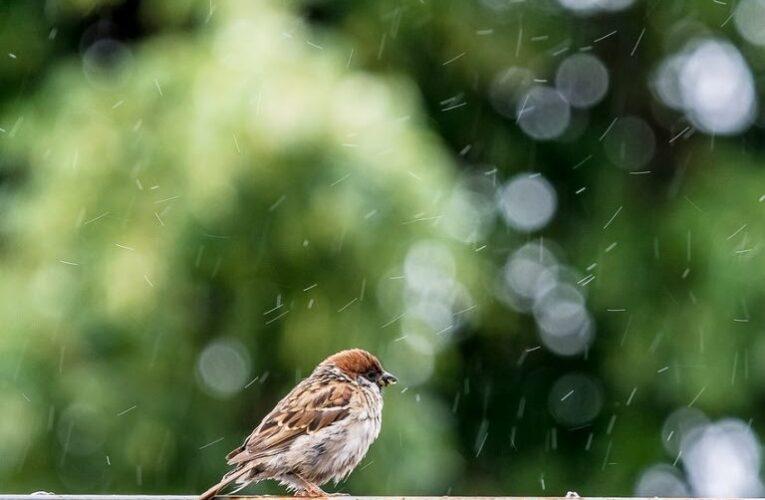 Украину зальют дожди