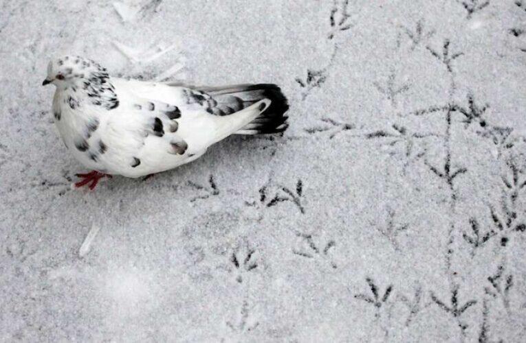 В Украину идет холодный циклон с интенсивным мокрым снегом