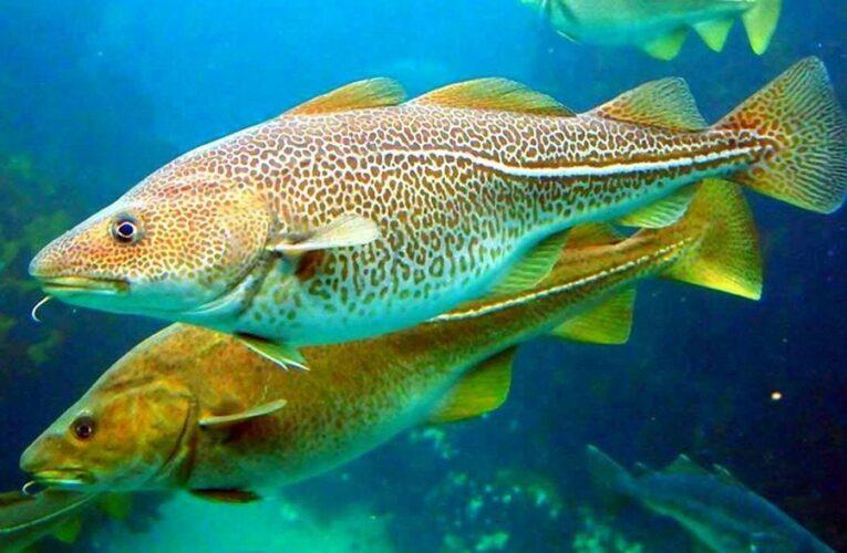 Ученые назвали пять общих признаков между рыбами и людьми