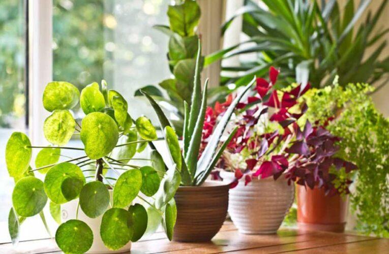 Биолог перечислил растения — убийцы бактерий