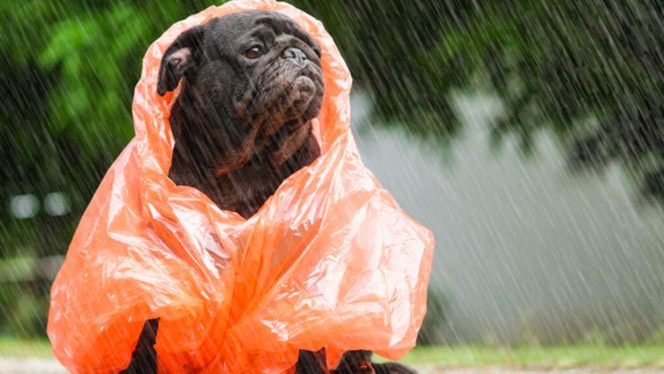Сегодня в Украине будет тепло и мокро