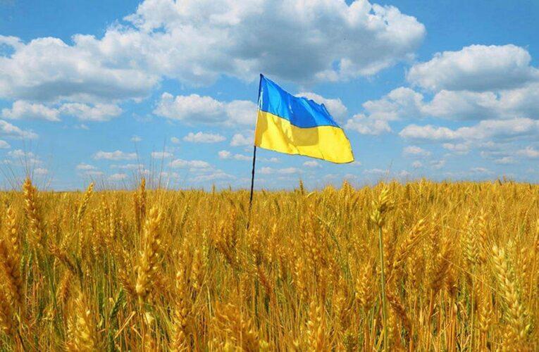 В правительстве подтвердили право каждого украинца на два гектара земли