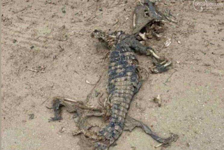 В Азовском море найден крокодил