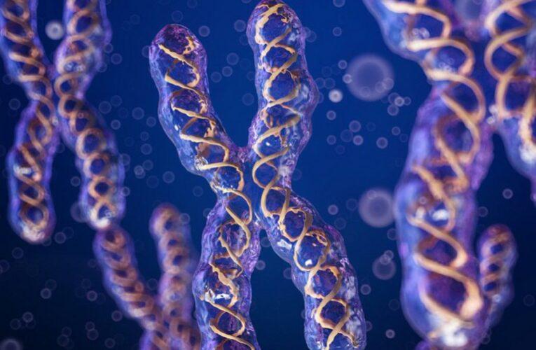 Ученые впервые вычислили массу хромосомы человека