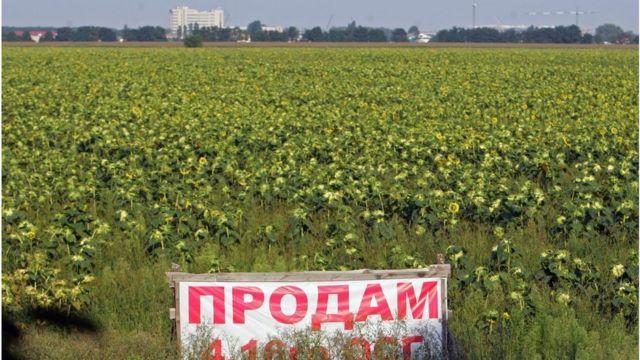 Правительство сообщило, у кого будет преимущество при покупке земельного участка