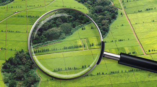 Сколько участков земли продано со дня открытия рынка, сообщили в Кабмине