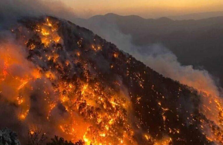 За поджоги лесов в Турции взяли ответственность террористы