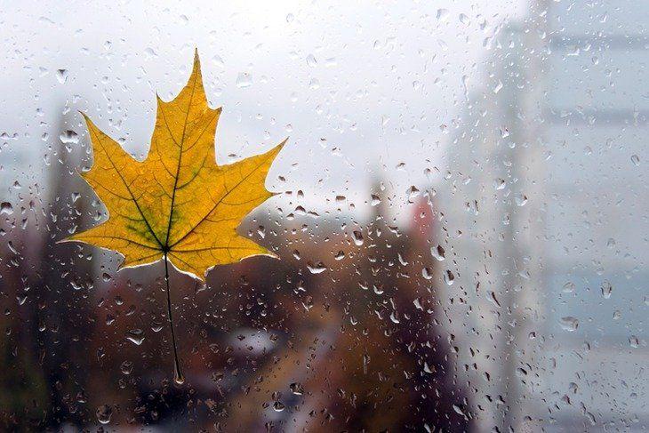 Ряд областей Украины накроют дожди