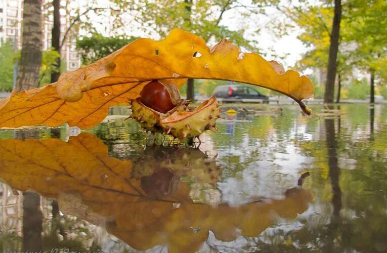 Киевлян предупредили о сильном дожде и ураганном ветре